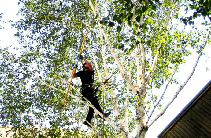 Coconut Creek-Broward County FL Tree Trimming and Stump Grinding Services-We Offer Tree Trimming Services, Tree Removal, Tree Pruning, Tree Cutting, Residential and Commercial Tree Trimming Services, Storm Damage, Emergency Tree Removal, Land Clearing, Tree Companies, Tree Care Service, Stump Grinding, and we're the Best Tree Trimming Company Near You Guaranteed!