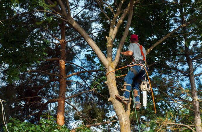 Davie-Broward County FL Tree Trimming and Stump Grinding Services-We Offer Tree Trimming Services, Tree Removal, Tree Pruning, Tree Cutting, Residential and Commercial Tree Trimming Services, Storm Damage, Emergency Tree Removal, Land Clearing, Tree Companies, Tree Care Service, Stump Grinding, and we're the Best Tree Trimming Company Near You Guaranteed!