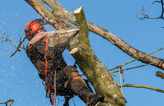 Fort Lauderdale-Broward County FL Tree Trimming and Stump Grinding Services-We Offer Tree Trimming Services, Tree Removal, Tree Pruning, Tree Cutting, Residential and Commercial Tree Trimming Services, Storm Damage, Emergency Tree Removal, Land Clearing, Tree Companies, Tree Care Service, Stump Grinding, and we're the Best Tree Trimming Company Near You Guaranteed!