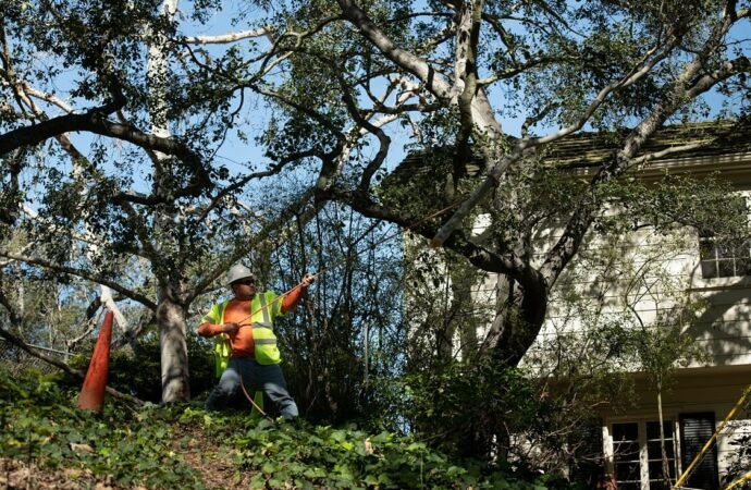 Lauderdale Lakes-Broward County FL Tree Trimming and Stump Grinding Services-We Offer Tree Trimming Services, Tree Removal, Tree Pruning, Tree Cutting, Residential and Commercial Tree Trimming Services, Storm Damage, Emergency Tree Removal, Land Clearing, Tree Companies, Tree Care Service, Stump Grinding, and we're the Best Tree Trimming Company Near You Guaranteed!