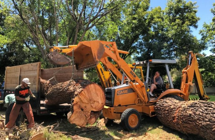 Lauderdale by the Sea-Broward County FL Tree Trimming and Stump Grinding Services-We Offer Tree Trimming Services, Tree Removal, Tree Pruning, Tree Cutting, Residential and Commercial Tree Trimming Services, Storm Damage, Emergency Tree Removal, Land Clearing, Tree Companies, Tree Care Service, Stump Grinding, and we're the Best Tree Trimming Company Near You Guaranteed!