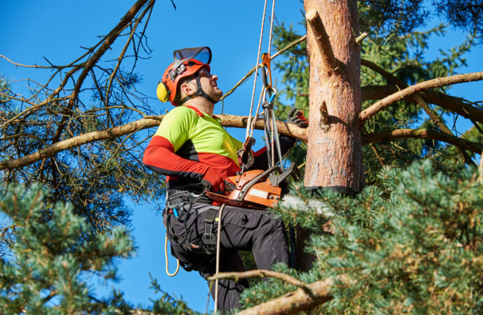 Lauderhill-Broward County FL Tree Trimming and Stump Grinding Services-We Offer Tree Trimming Services, Tree Removal, Tree Pruning, Tree Cutting, Residential and Commercial Tree Trimming Services, Storm Damage, Emergency Tree Removal, Land Clearing, Tree Companies, Tree Care Service, Stump Grinding, and we're the Best Tree Trimming Company Near You Guaranteed!