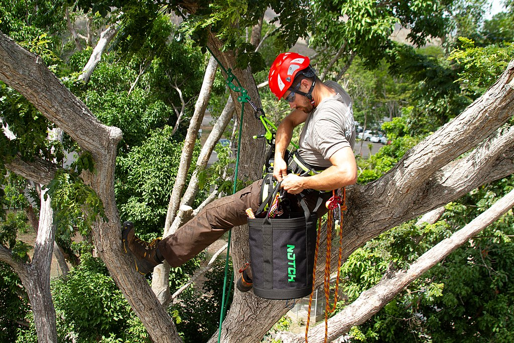 Lazy Lake-Broward County FL Tree Trimming and Stump Grinding Services-We Offer Tree Trimming Services, Tree Removal, Tree Pruning, Tree Cutting, Residential and Commercial Tree Trimming Services, Storm Damage, Emergency Tree Removal, Land Clearing, Tree Companies, Tree Care Service, Stump Grinding, and we're the Best Tree Trimming Company Near You Guaranteed!