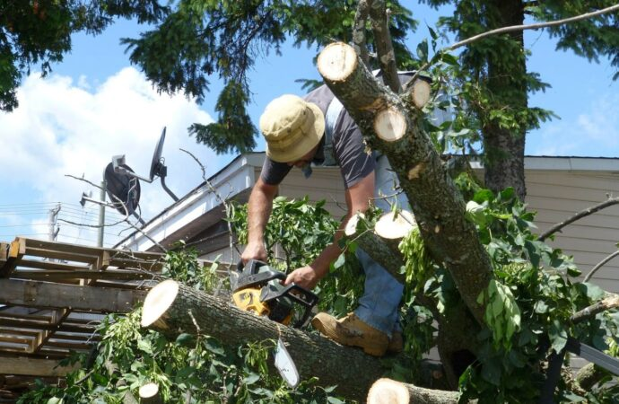 Miramar-Broward County FL Tree Trimming and Stump Grinding Services-We Offer Tree Trimming Services, Tree Removal, Tree Pruning, Tree Cutting, Residential and Commercial Tree Trimming Services, Storm Damage, Emergency Tree Removal, Land Clearing, Tree Companies, Tree Care Service, Stump Grinding, and we're the Best Tree Trimming Company Near You Guaranteed!