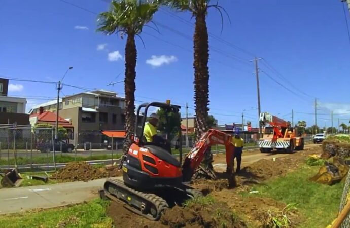 Palm Tree Removal-Broward County FL Tree Trimming and Stump Grinding Services-We Offer Tree Trimming Services, Tree Removal, Tree Pruning, Tree Cutting, Residential and Commercial Tree Trimming Services, Storm Damage, Emergency Tree Removal, Land Clearing, Tree Companies, Tree Care Service, Stump Grinding, and we're the Best Tree Trimming Company Near You Guaranteed!