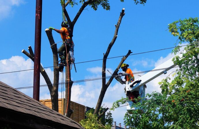 Plantation-Broward County FL Tree Trimming and Stump Grinding Services-We Offer Tree Trimming Services, Tree Removal, Tree Pruning, Tree Cutting, Residential and Commercial Tree Trimming Services, Storm Damage, Emergency Tree Removal, Land Clearing, Tree Companies, Tree Care Service, Stump Grinding, and we're the Best Tree Trimming Company Near You Guaranteed!