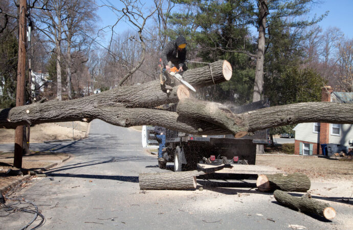 Residential Tree Services-Broward County FL Tree Trimming and Stump Grinding Services-We Offer Tree Trimming Services, Tree Removal, Tree Pruning, Tree Cutting, Residential and Commercial Tree Trimming Services, Storm Damage, Emergency Tree Removal, Land Clearing, Tree Companies, Tree Care Service, Stump Grinding, and we're the Best Tree Trimming Company Near You Guaranteed!