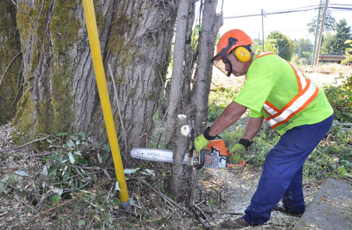 Southwest Ranches-Broward County FL Tree Trimming and Stump Grinding Services-We Offer Tree Trimming Services, Tree Removal, Tree Pruning, Tree Cutting, Residential and Commercial Tree Trimming Services, Storm Damage, Emergency Tree Removal, Land Clearing, Tree Companies, Tree Care Service, Stump Grinding, and we're the Best Tree Trimming Company Near You Guaranteed!