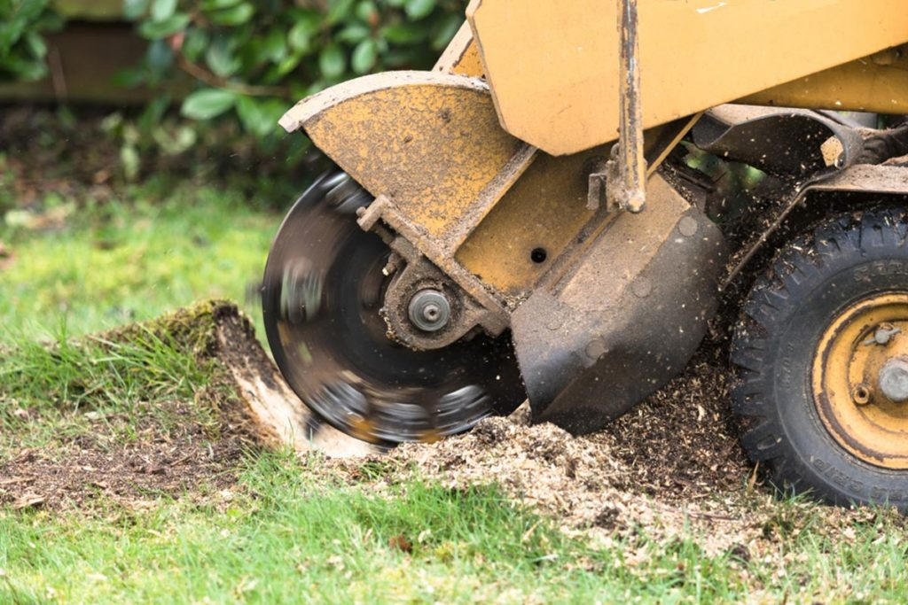 Stump Grinding-Broward County FL Tree Trimming and Stump Grinding Services-We Offer Tree Trimming Services, Tree Removal, Tree Pruning, Tree Cutting, Residential and Commercial Tree Trimming Services, Storm Damage, Emergency Tree Removal, Land Clearing, Tree Companies, Tree Care Service, Stump Grinding, and we're the Best Tree Trimming Company Near You Guaranteed!