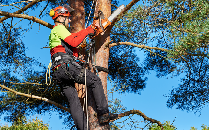 Sunrise-Broward County FL Tree Trimming and Stump Grinding Services-We Offer Tree Trimming Services, Tree Removal, Tree Pruning, Tree Cutting, Residential and Commercial Tree Trimming Services, Storm Damage, Emergency Tree Removal, Land Clearing, Tree Companies, Tree Care Service, Stump Grinding, and we're the Best Tree Trimming Company Near You Guaranteed!