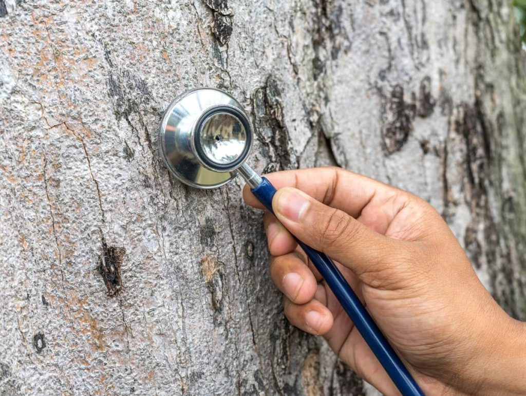 Tree Assessments-Broward County FL Tree Trimming and Stump Grinding Services-We Offer Tree Trimming Services, Tree Removal, Tree Pruning, Tree Cutting, Residential and Commercial Tree Trimming Services, Storm Damage, Emergency Tree Removal, Land Clearing, Tree Companies, Tree Care Service, Stump Grinding, and we're the Best Tree Trimming Company Near You Guaranteed!