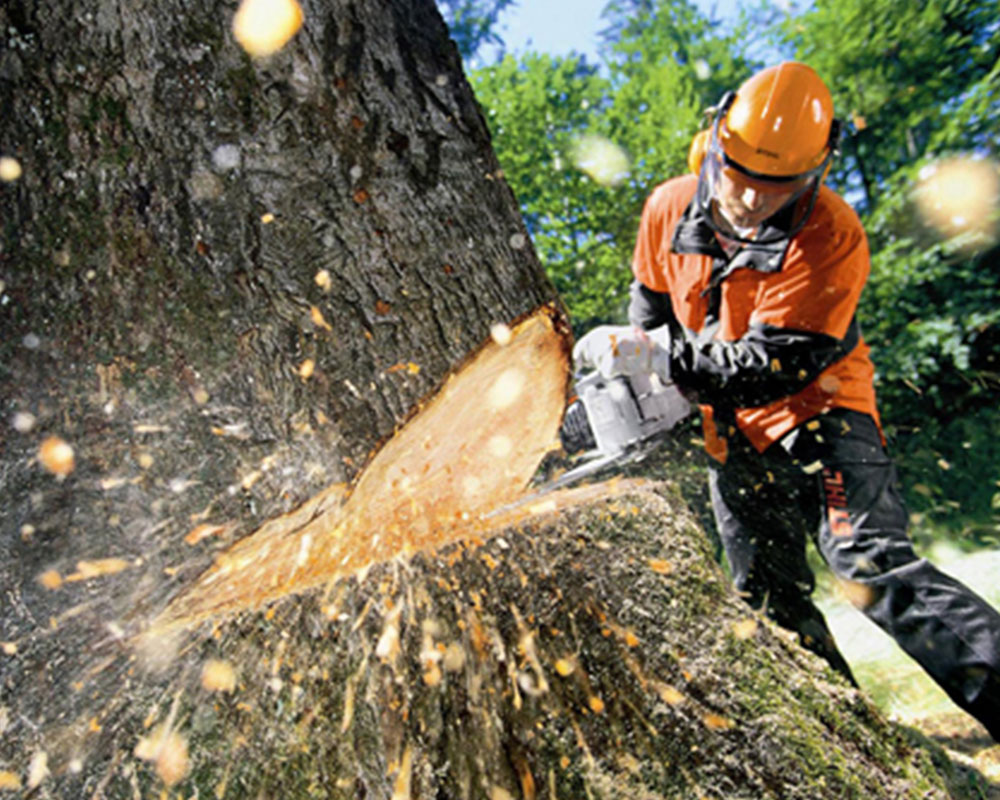 Tree Cutting-Broward County FL Tree Trimming and Stump Grinding Services-We Offer Tree Trimming Services, Tree Removal, Tree Pruning, Tree Cutting, Residential and Commercial Tree Trimming Services, Storm Damage, Emergency Tree Removal, Land Clearing, Tree Companies, Tree Care Service, Stump Grinding, and we're the Best Tree Trimming Company Near You Guaranteed!
