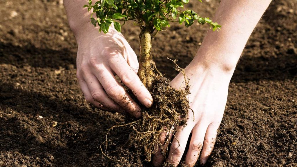 Tree Planting-Broward County FL Tree Trimming and Stump Grinding Services-We Offer Tree Trimming Services, Tree Removal, Tree Pruning, Tree Cutting, Residential and Commercial Tree Trimming Services, Storm Damage, Emergency Tree Removal, Land Clearing, Tree Companies, Tree Care Service, Stump Grinding, and we're the Best Tree Trimming Company Near You Guaranteed!
