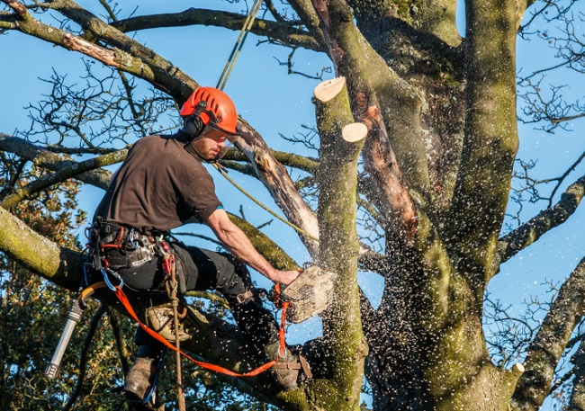 West Park-Broward County FL Tree Trimming and Stump Grinding Services-We Offer Tree Trimming Services, Tree Removal, Tree Pruning, Tree Cutting, Residential and Commercial Tree Trimming Services, Storm Damage, Emergency Tree Removal, Land Clearing, Tree Companies, Tree Care Service, Stump Grinding, and we're the Best Tree Trimming Company Near You Guaranteed!